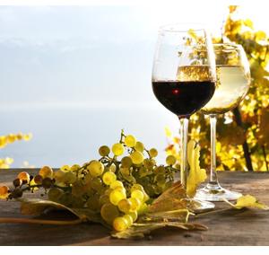 Soirée Wine & Dine - Autour de la chasse