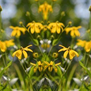 Frühlingsangebot: kostenloses Upgrade